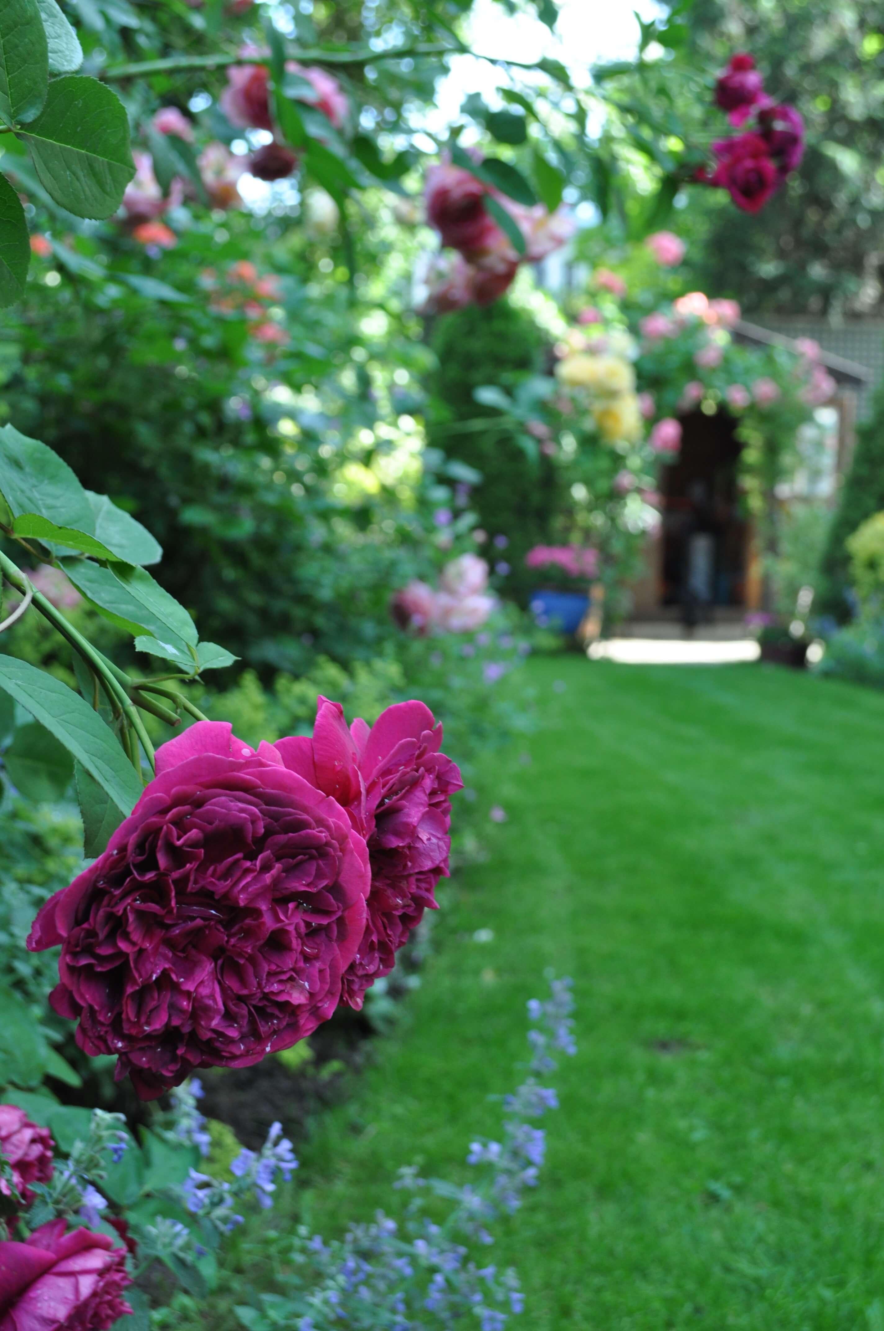 Un jardin aménagé par le paysagiste Vert Ambiance